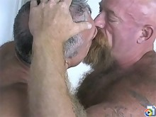 Tough bears lick cock and fuck ass