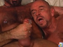 Pierced bear's dick spews hot jizz
