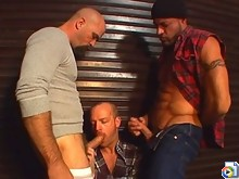 Back alley hairy bear threesome